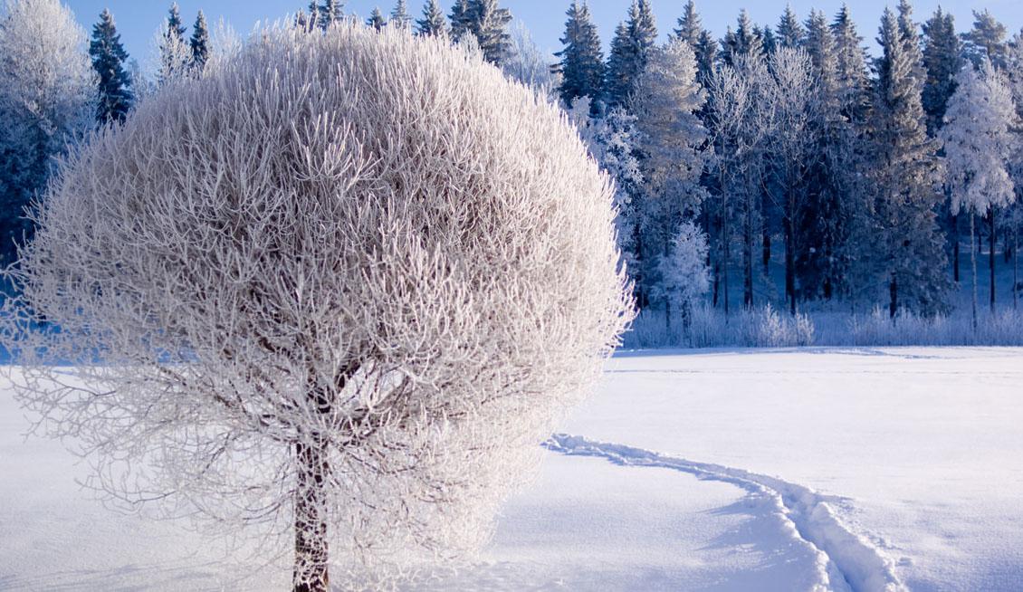 Receita de Inverno. Parte I.