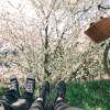 O que aprendi sobre o Amor